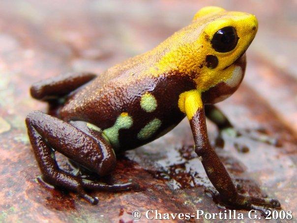 Das Jahr des Frosches in Kolumbien - Südamerika Blog