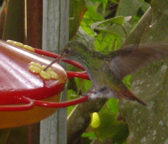 Kolibri 2
