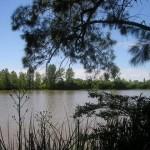 Tigre-Delta