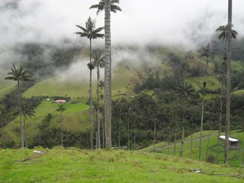 Bosque de palmas