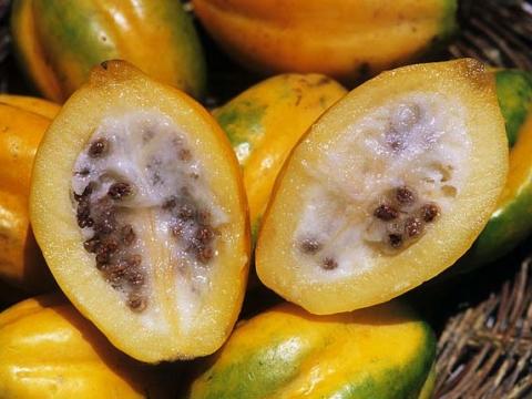 Exotische Früchte: Papaya arequipeña