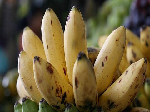 exotische Früchte: Platano_manzanita