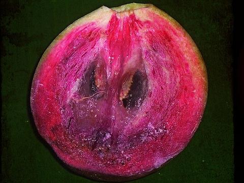 Die Frucht Caimito aus Peru - viventura Blog