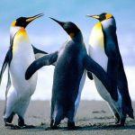Pinguine_91272