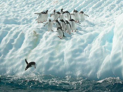 pinguine_58678