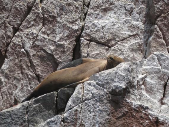 Peru Sehenswürdigkeiten: Islas Ballestas