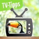 TV Tipps Südamerika August