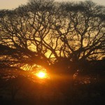 Sonnenaufgang.in.den.Llanos_abcd-480-61951