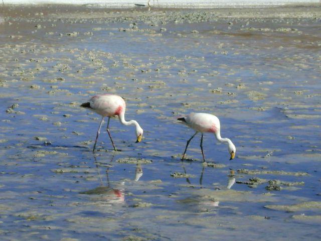 Laguna Colorada Flamingo Tours