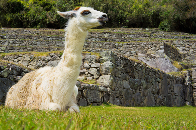 7 Facts About Machu Picchu - South America Travel Blog